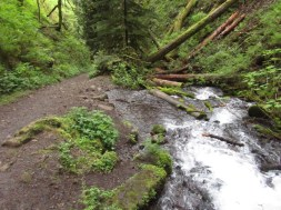 A places the Creek and trail are almost one. You can only do this with a spring fed creek.