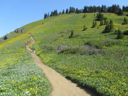 Heading up the trail to the summit. Green and yellow on the hill.