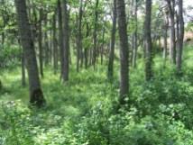 Nice little Oak grove on the trail.
