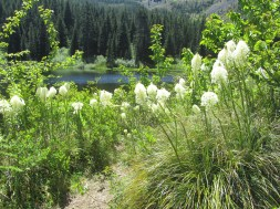 We also had a lot of Blooming Bear Grass along the trail.