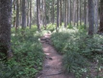 So this part is all standard trail and walk in the woods.