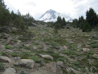 A view up to Mt. Hood from the Timberline Trail.