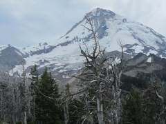 View of Mt Hood from the Cloud Cap Inn.