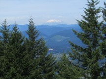 A view of Mt. St. Helens through the trees.