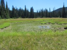 Second Meadow Pond