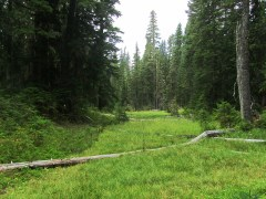 One of the many meadows the trail crosses.
