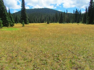 Big Meadow with East Crater behind,