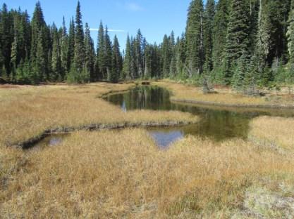 Pond by CCCa