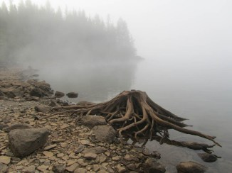 Heavy morning fog.