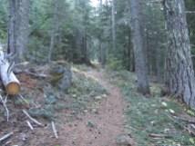 The trail does a steady climb through the woods.