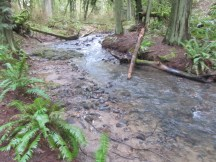 One of the creeks that run through the park.