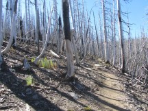 The trail goes through the width of the Dollar Lake Fire.