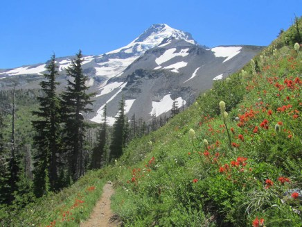 The trail dropping into Elk Cove gives you one of the most scenic views of Mt. Hood.