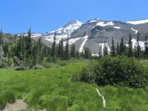 Out in the meadow of Elk Cove looking up at Mt. Hood.