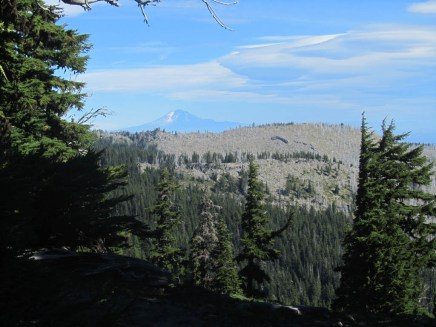 Through opens in the trees I get a view of Mt. Adams and the gnarl ridge burn.