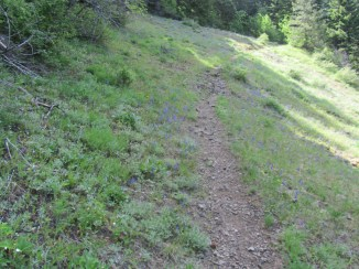 This is one small meadow that the trail crosses. This is where I met up with Lori and Becky on the way back down.