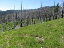 Green meadow with burnt trees.