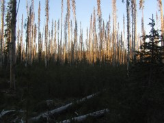 It was a cold morning and the sun slowly came up on the ghost forest.