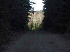 I walked a little ways down 4220 but later heard from others that the road gets much worse.