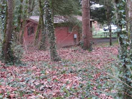 One of the cabins in a wooded setting. These are very popular so you have book well in advance on the weekends and summer.