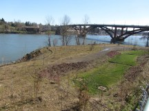 Looking over a newly planted area to the Sellwood Bridge.