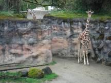 Zoo_DSCF1545