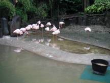 Zoo_DSCF1554