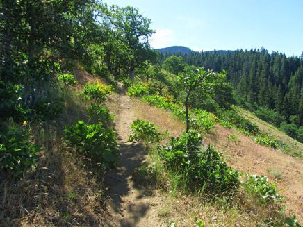 Oak Ridge trail climbing up through the open section.