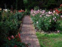 RoseGarden_DSCF2643