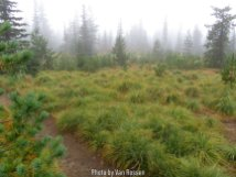 At a little over 4000 ft elevation we were in the clouds. The fog we heavy with moisture that let to the trees dripping on us all day.