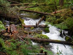 Little ZigZag Creek