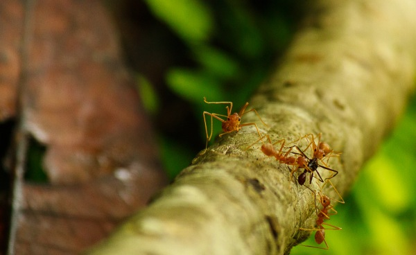 Ants forage in the undergrowth