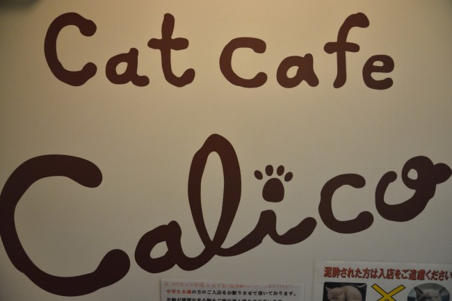 Cat Cafe Calico in Shinjuku by R. Y. / Flickr