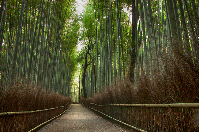 My first look at the Bamboo forest of Arashiyama