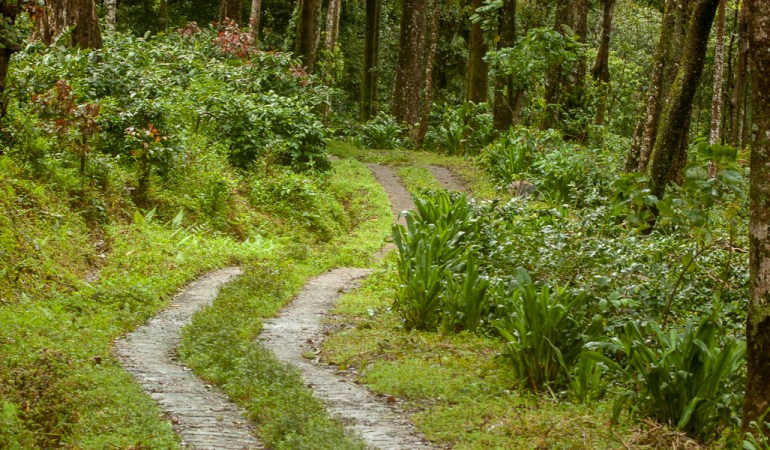 Searching for frogs in coffee – The Coorg Adventure
