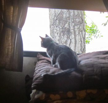 Lexi in her Window Perch