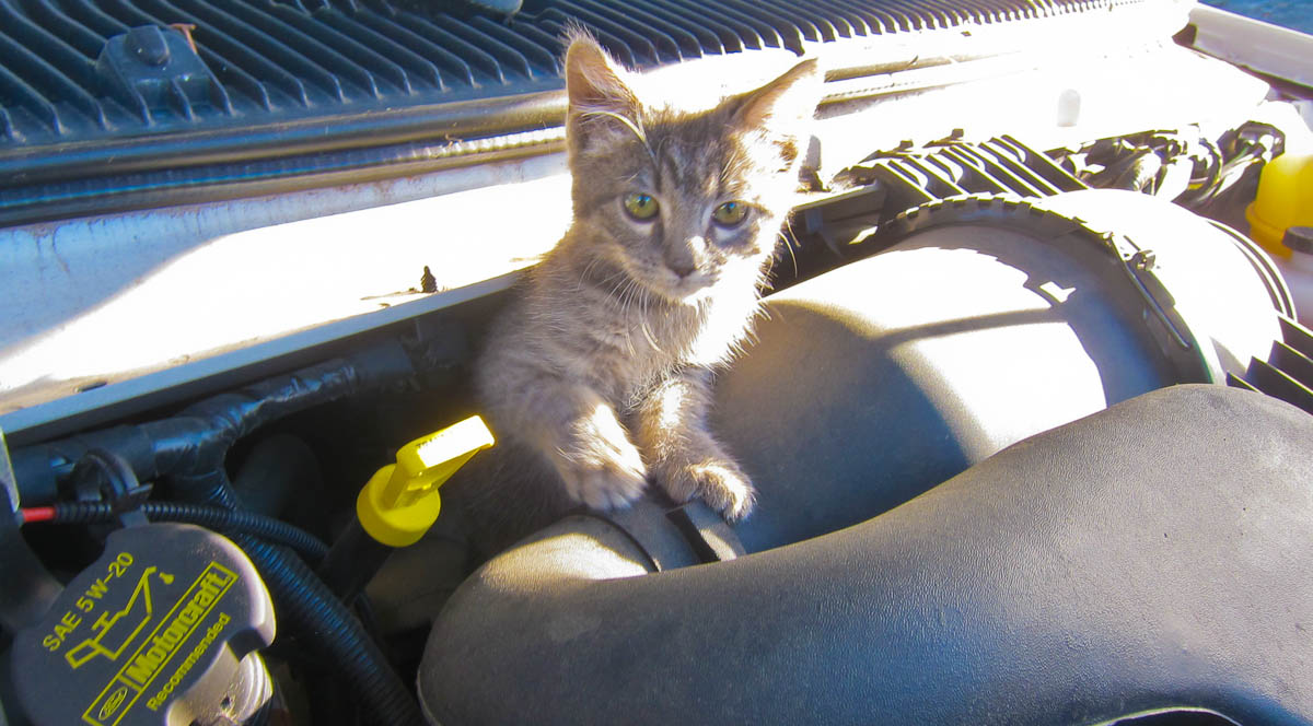 Lexi In The Engine