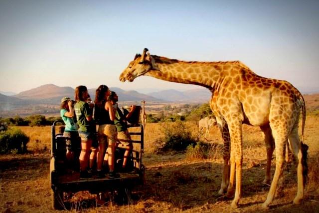 Wildlife Sanctuaries in South Africa - By GoEco.jpg
