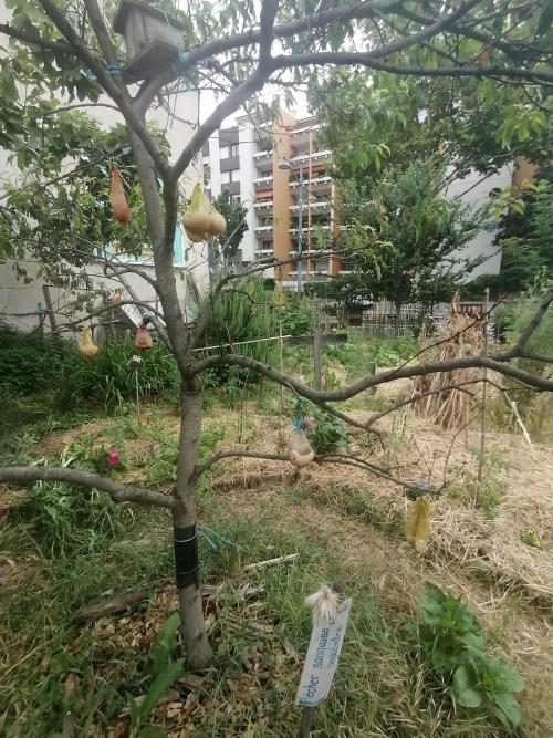 jardin_1.jpg