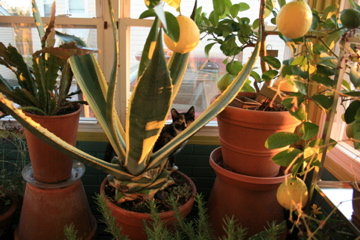 Audrey in the Agave