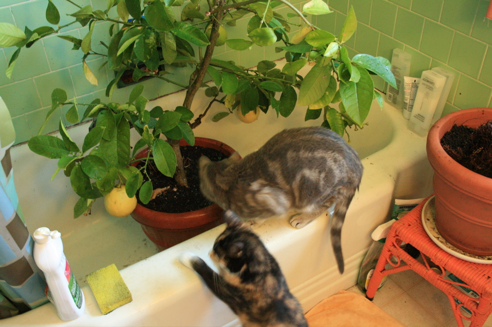 kittens help with leaf washing
