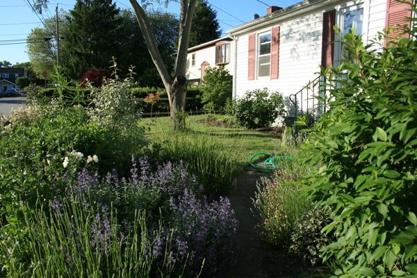 frontyard garden - what the camera sees