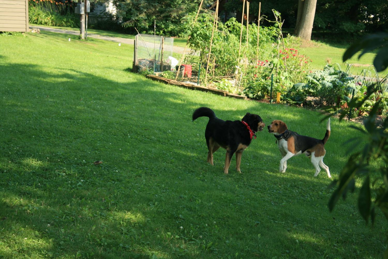 Nino and Buddy
