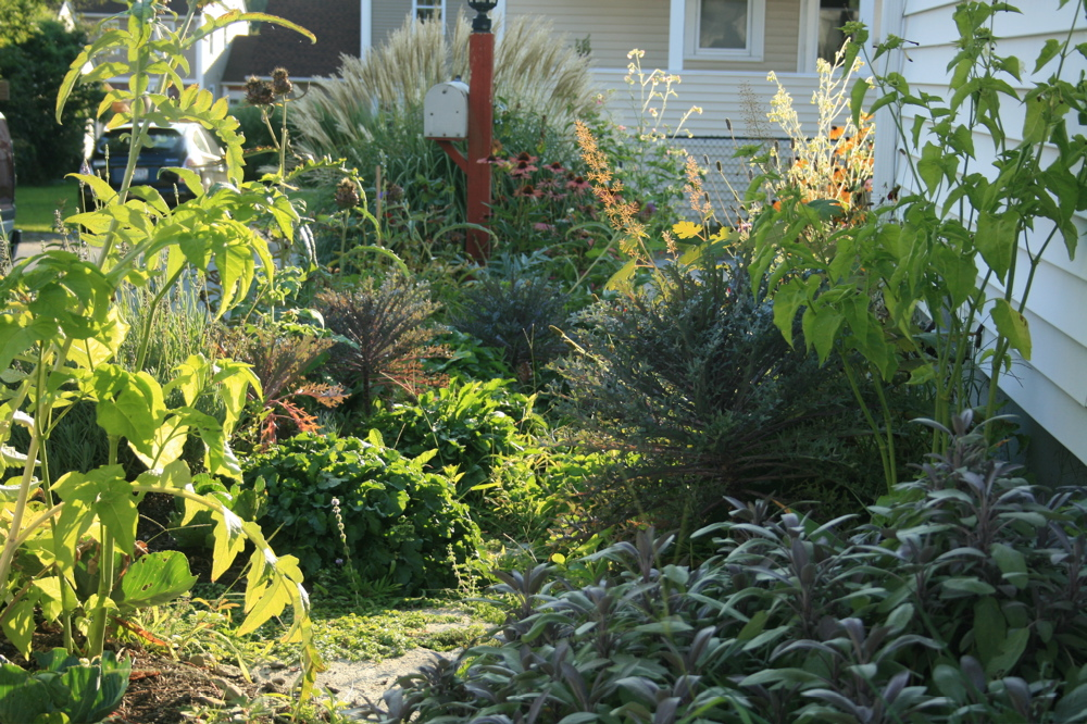 the sideyard garden