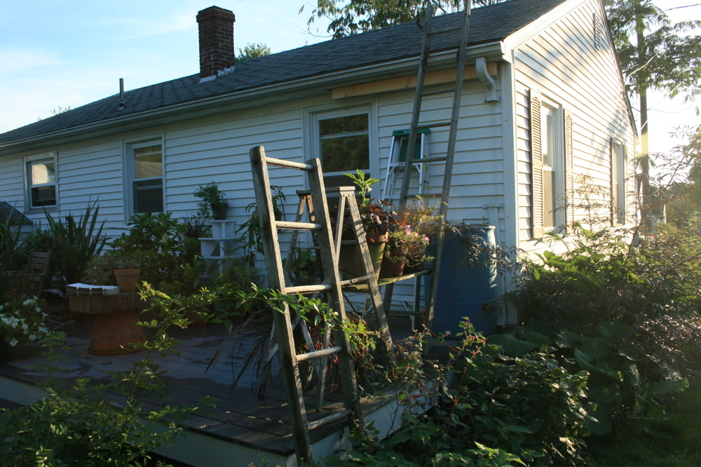 before. (ladders as plant supports were an ugly nudge toward arbor)