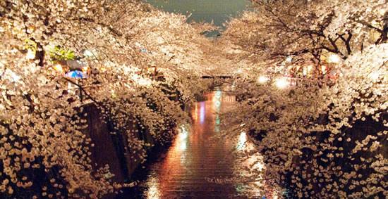 桜img005