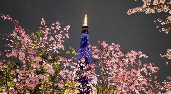 桜img004