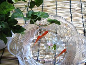 金魚の飼い方