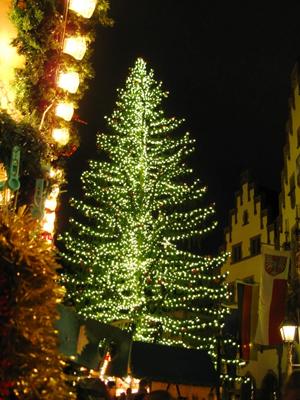 クリスマスツリーは何の木?おすすめの種類や育て方は?