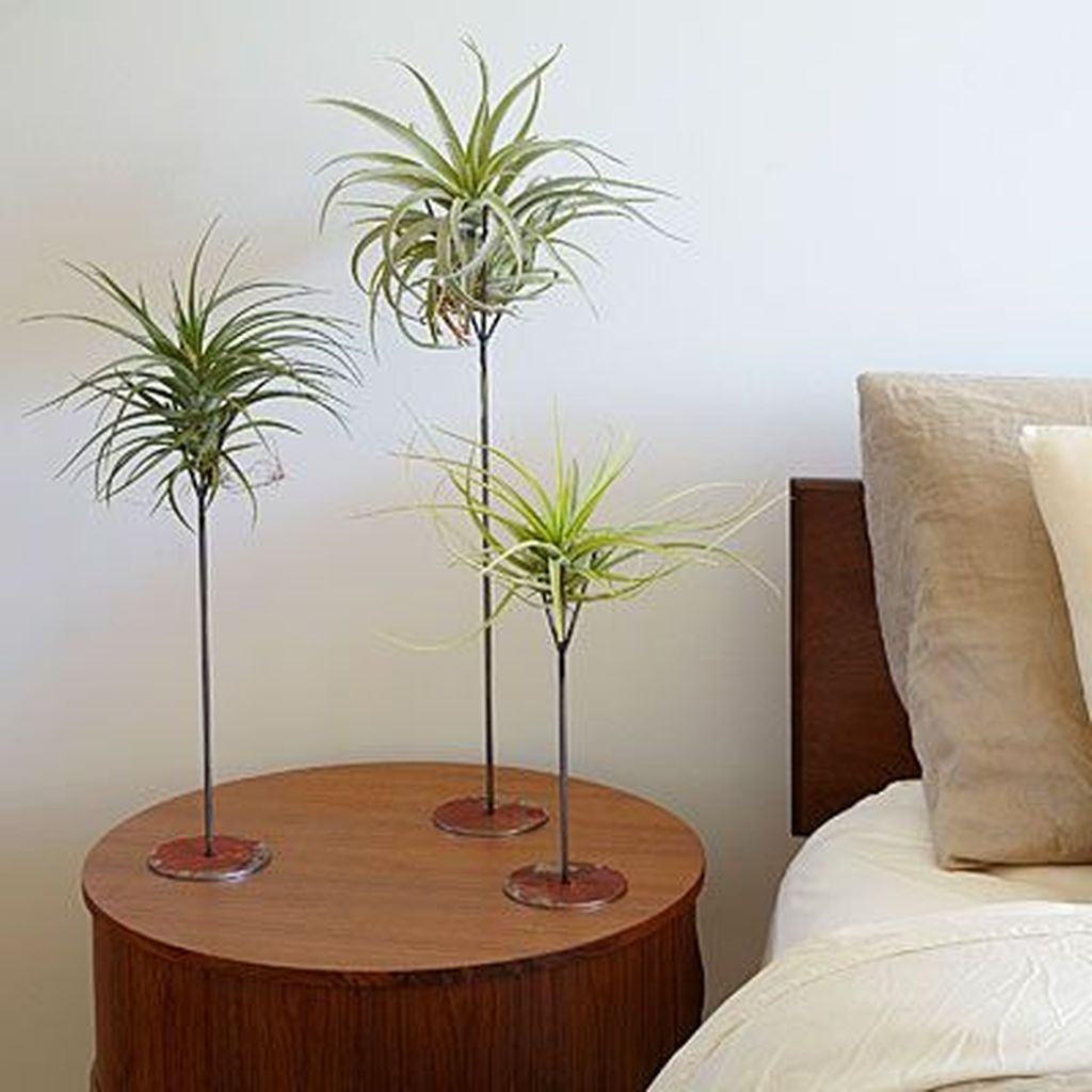 Beautiful Plant Decors For Your House 02